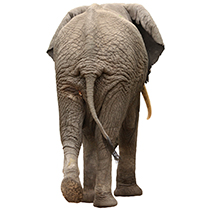 elefante-back